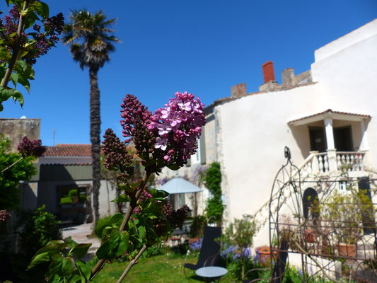 hotel-ile-de-re-la-maison-douce_18.JPG