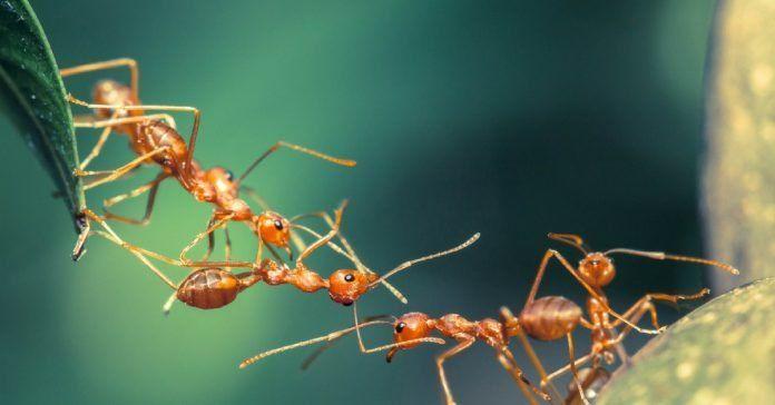 04.02.20 au 08.02.20 l emonde des insectes.jpg