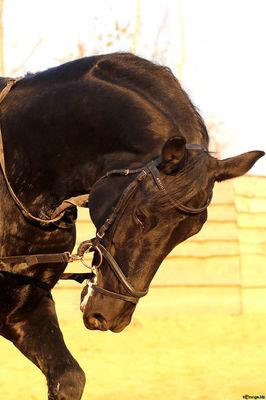 horse-sport-training-soaps-37233.jpg