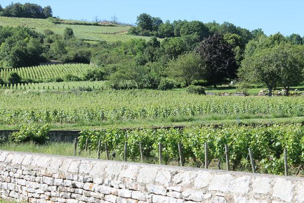 Saint-Martin-Sous-Montaigu-vallee-des-vaux-OT (9).JPG