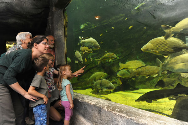 pescalis-aquarium©PWall-2000-pescalis (pw) 9831.jpg