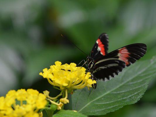 jardin-papillons-vannes (4).JPG