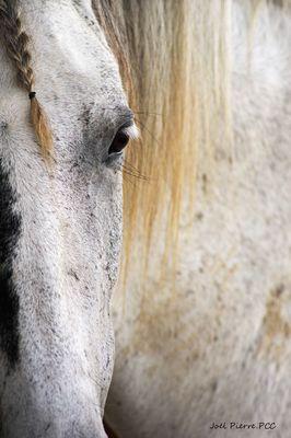 Du 06.12.2018 au 06.01.2019 Les chevaux de la et de la-bats.jpg