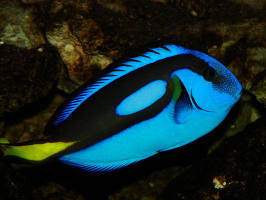 Aquarium Roc des Harmonies 1.JPG
