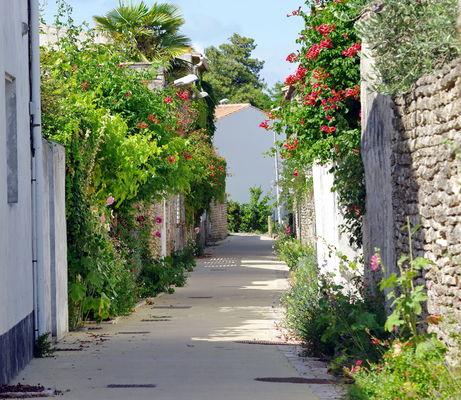 Ruelles fleuries île de Ré.jpeg