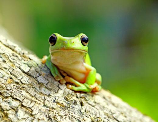 20.03.20 grenouilles.jpg