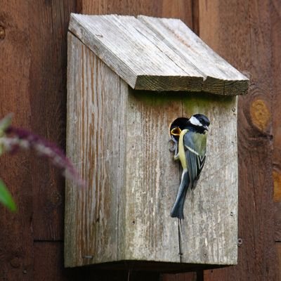 titmouse_bird_natural_expensive_young_birds_nest_box_nesting_box-565379.jpg!d.jpg