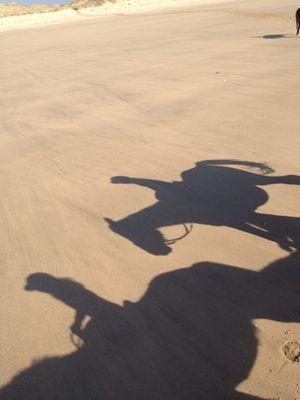 ecuriesdumoulinmoreau-laflotte-iledere-ombres.jpg