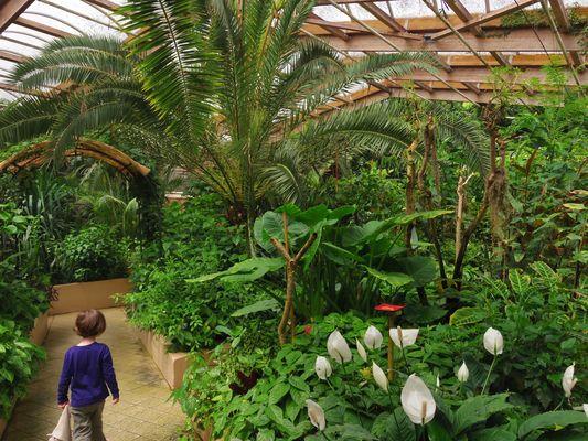 jardin-papillons-vannes (10).JPG
