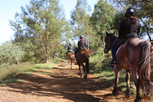 zarlor quiétude à cheval pack 6.jpg