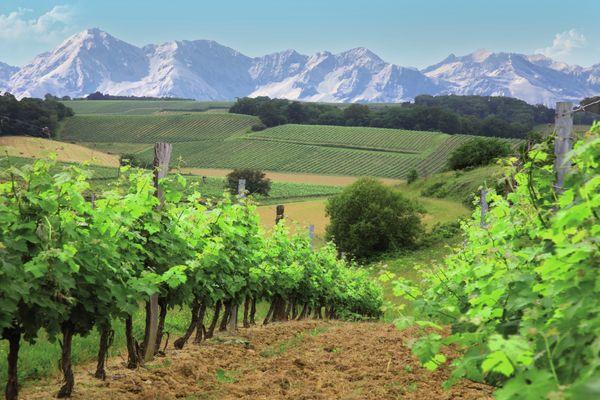Vignoble Madiran Vignes Pyrénées © OTPVA.jpg