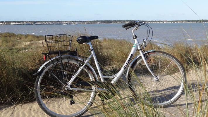 Vélo adulte confort.JPG