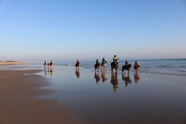 ecuries-du-moulin-moreau-laflotte-iledere-plage.JPG