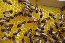 Visite_Ass_Pat_abeilles.jpeg
