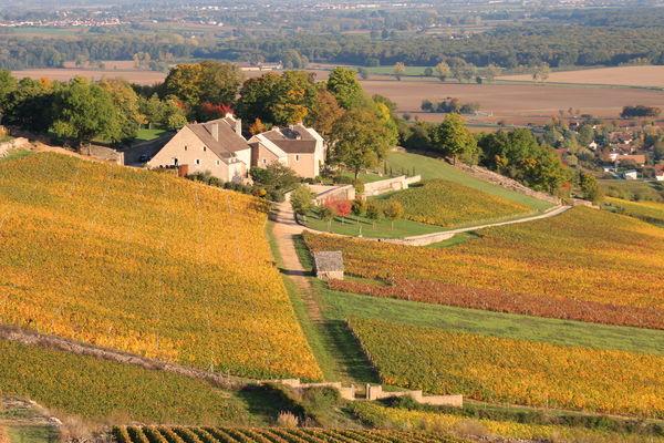 Vignes-Givry-automne-2017-JM (36).JPG
