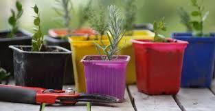 plantes petites.jpg