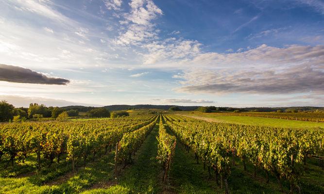 Soleil couchant sur les vignes à Mercuès © Lot Tourisme C. Novello 028.jpg