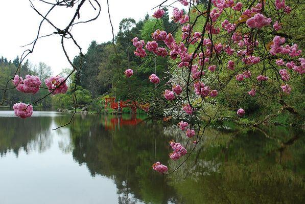 maulevrier-parc oriental-printemps3.JPG