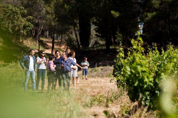 Château Grand Moulin visite dans les vignes.jpg