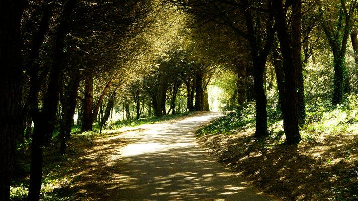 forêt@pierre-galine-(3b).jpg
