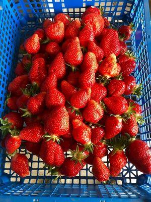 fraises 5.jpg