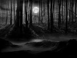 forêt la nuit.jpg