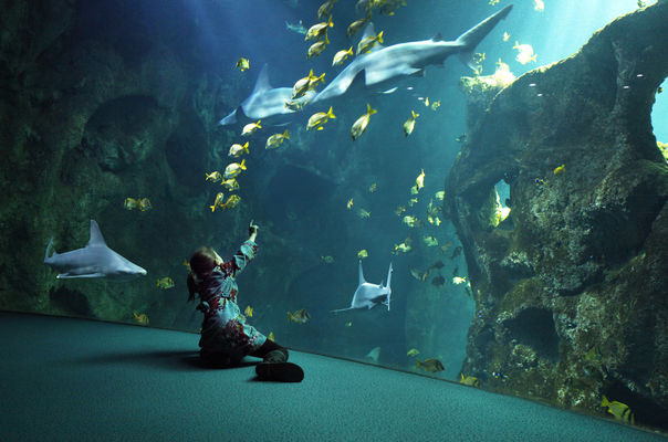 amphitheatre_requins_enfant_1(c)AquariumLaRochelleSAS.jpg