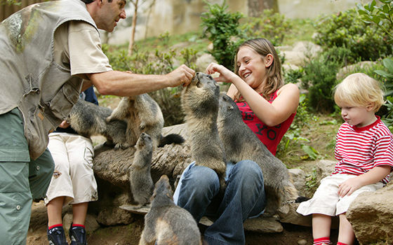 marmotes.jpg