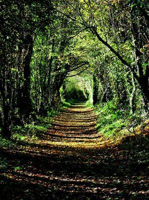environnement_bocages_vus_©joseph_chauveau.jpg