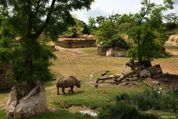 Vallee des rhinoceros © Bioparc - L. Joffrion.jpg