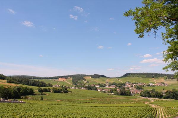 Mercurey-vin-vignes-paysages-vignobles-OT (41).JPG