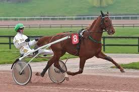 cheval trotteur.jpg