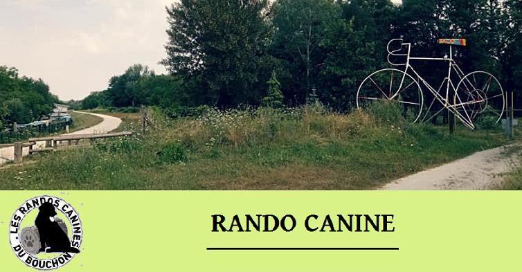 Rando canine - Foicy.jpg