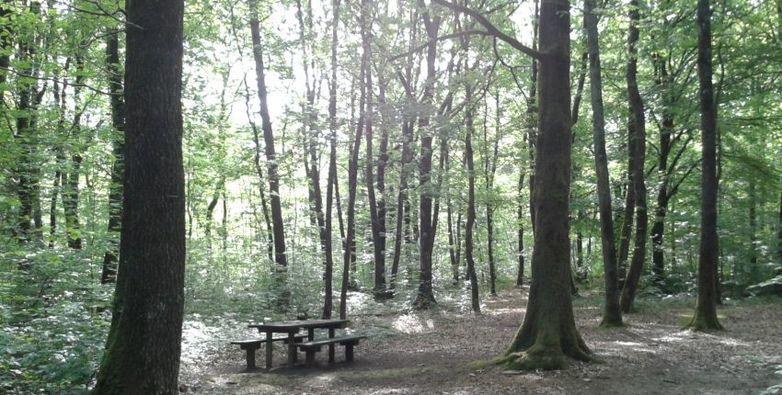 forêt 5 sens.jpeg