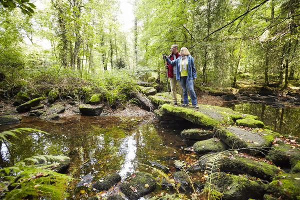Randonnée dans le bois de St Maur.jpg