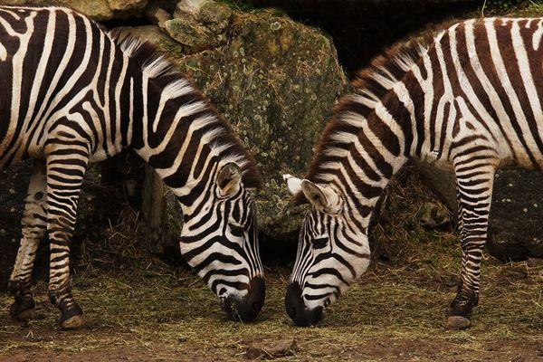Zoo_PontScorff (3).jpg