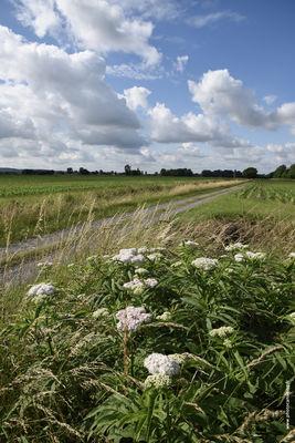 4. le sentier à travers la plaine.jpg