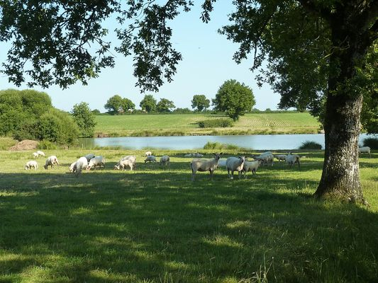 rorthais-gite-charmille-moutons1©BenedicteBesnard.jpg