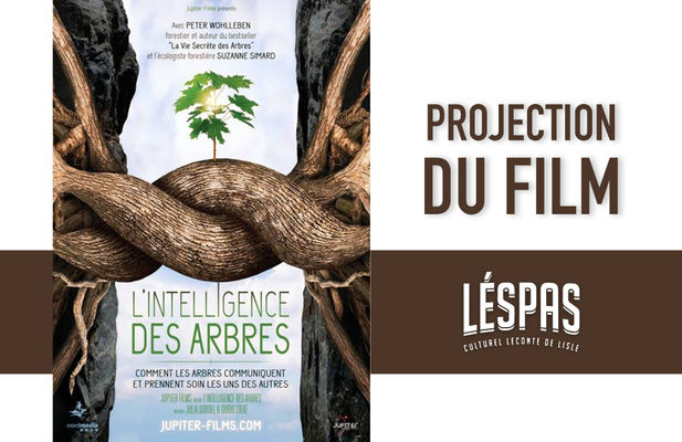 projection film l'intelligence des arbres.jpg