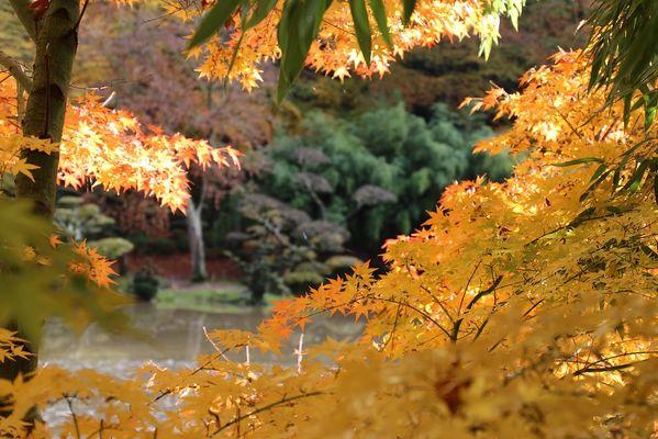 maulevrier-parc oriental-automne5.JPG