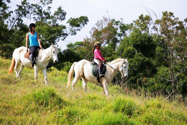 zarlor quiétude à cheval pack 4.jpg