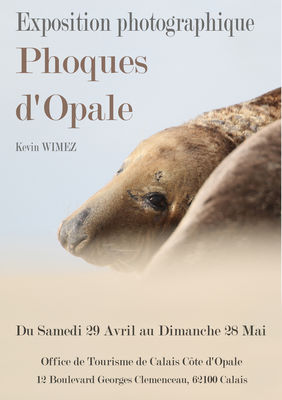 affiche phoques dopale calais (004).jpg