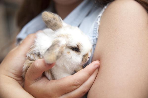 Un câlin aux lapins - La Ferme Les Caperies - Richebourg.jpg