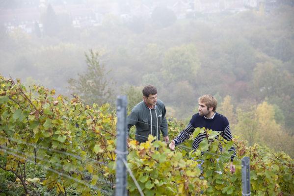 Terril viticole - Haillicourt.jpg