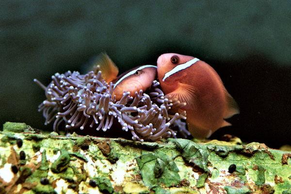aquarium du roc granville.jpg
