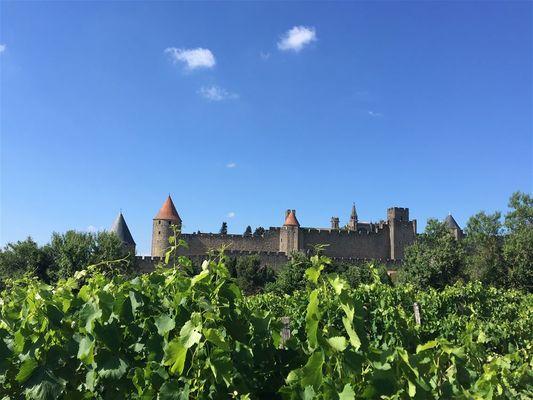 Excursion en minibus - Demi journée découverte des vins de l'Aude.jpeg