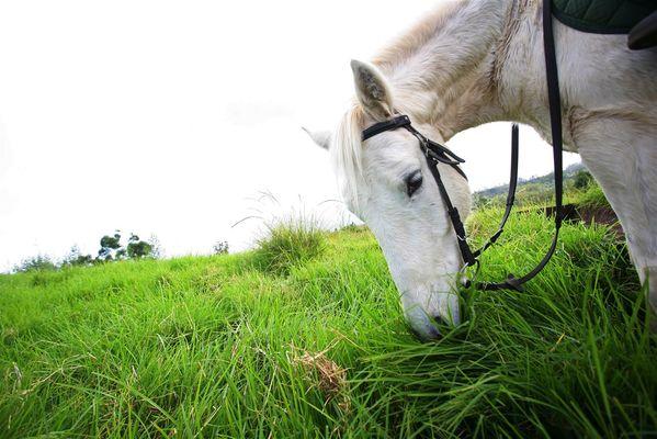 zarlor quiétude à cheval pack 2.jpg
