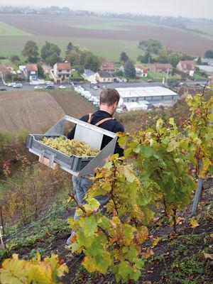 Terril viticole - Haillicourt 1.jpg