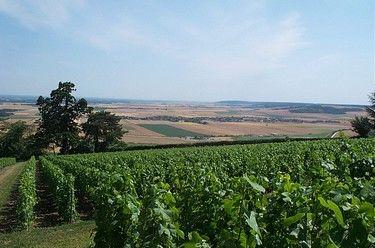 vignes et plaine nv.jpg