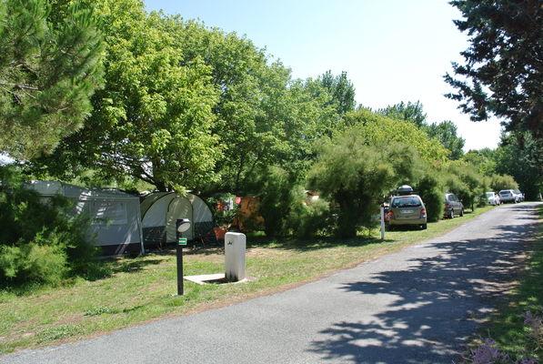 camping municipal les portes en ré (2).JPG